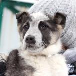 Домовитый щенок Добби доброму человеку, Екатеринбург