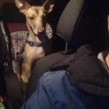 Найдена собака (мальчик), Екатеринбург