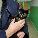 Кошка ищет дом, Екатеринбург