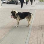 Потерявшаяся собака, Екатеринбург