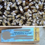 Карпатские пчёлы, матки, пчелопакеты, пчелосемьи, мёд, Екатеринбург