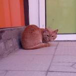 Потерялся кот, ищет хозяина., Екатеринбург