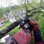 Спил деревьев, Екатеринбург