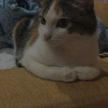Пропала кошка Лейла, Екатеринбург