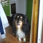 Потерялась собака, Екатеринбург