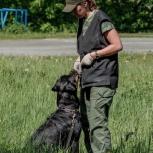 Дрессировка собак и коррекция поведения, Екатеринбург