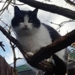 Пушистый кот Дима в добрые руки, Екатеринбург