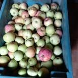 Яблоки падалица, Екатеринбург