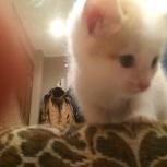 Найден котенок, Екатеринбург