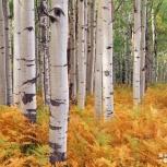 Продаются  лесные  насаждения  на корню, Екатеринбург