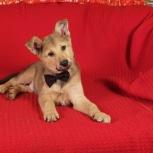 Лапочка щенок Тимоша-очень ищет Вас, в дар, Екатеринбург