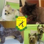 Стрижка кошек и собак без наркоза, Екатеринбург
