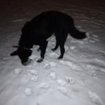 Найден черный пес на Уралмаше, Екатеринбург