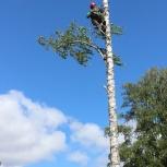 Удаление (спил) деревьев, Екатеринбург