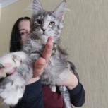 Котята мейн -кун, Екатеринбург