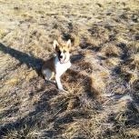 Потерялась собака инвалид, Екатеринбург