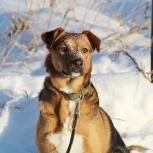 Собака Багги #, Екатеринбург