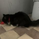 Найдена кошка или кот, Екатеринбург