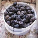 Плоды маньчжурского ореха, Екатеринбург