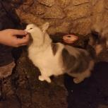 Найден кот или кошка, Екатеринбург