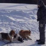 Дрессировка и обучение собак на дому, Екатеринбург