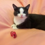 Пусенька кошка 7-8 месяцев ищет любящий дом, Екатеринбург