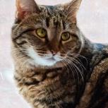 Кошка Клеопатра ищет дом, Екатеринбург
