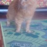 Найден рыжий кот, Екатеринбург