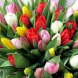 Тюльпаны оптом от производителя к 8 марта, высота стебля от 40см, Екатеринбург