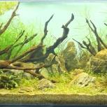 Оформление и обслуживание аквариумов, Екатеринбург