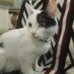 Кормящая кошка хочет домой к деткам..., Екатеринбург