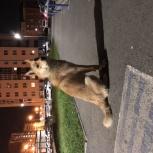 Замечен пёс в районе краснолесье/мкр-н европейский, Екатеринбург