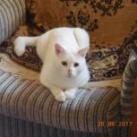Требуется передержка двух кошек на год за вознаграждение, Екатеринбург
