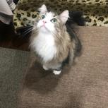 Помогите найти кошку, Екатеринбург