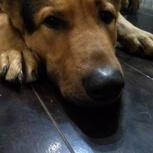 найдена собака, Екатеринбург