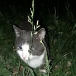 Замечен домашний кот, Екатеринбург