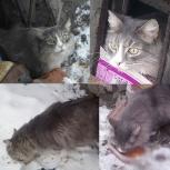Найден серый пушистый кот, Екатеринбург