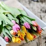 Тюльпаны в розницу, Екатеринбург
