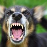 Отпугиватели собак и диких животных, Екатеринбург