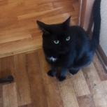 Потерялся кот, вернуть за вознаграждение, Екатеринбург