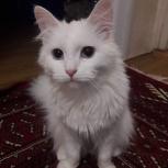 Потерянный котёнок, Екатеринбург