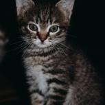 передержка для кошек/котят!, Екатеринбург