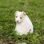 Мисс прелесть щенячьего мира-Принцесса, в дар, Екатеринбург