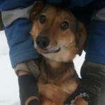 Собака улыбака Глаша ищет дом, Екатеринбург