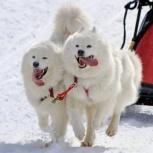 Катание на собачьей упряжке, Екатеринбург
