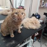Стрижка беспокойных  кошек без релаксантов, Екатеринбург