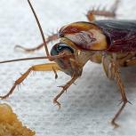 Уничтожение тараканов и клопов, Екатеринбург