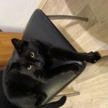Потерялся чёрный кот, Екатеринбург