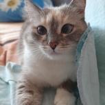 Кошечка ищет дом, Екатеринбург