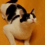 Общительный крупный котик, Екатеринбург